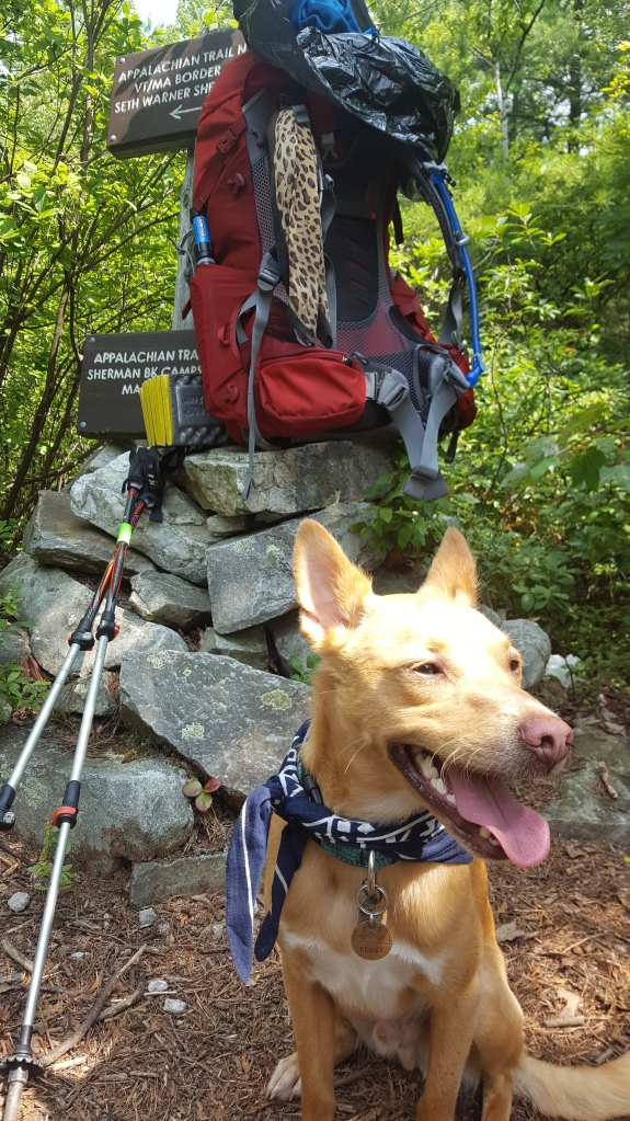 Benny the best hiking dog poses for his first photo on the Vermont Long Trail.