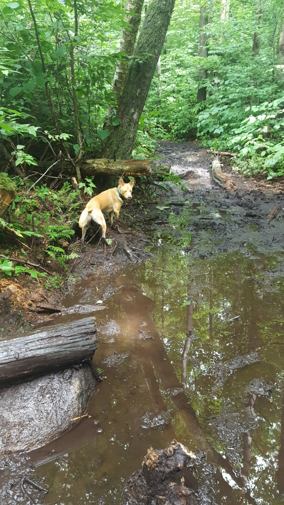 A bit muddy on the Vermont Long Trail, some rough hiking miles for the hiker and the dog.