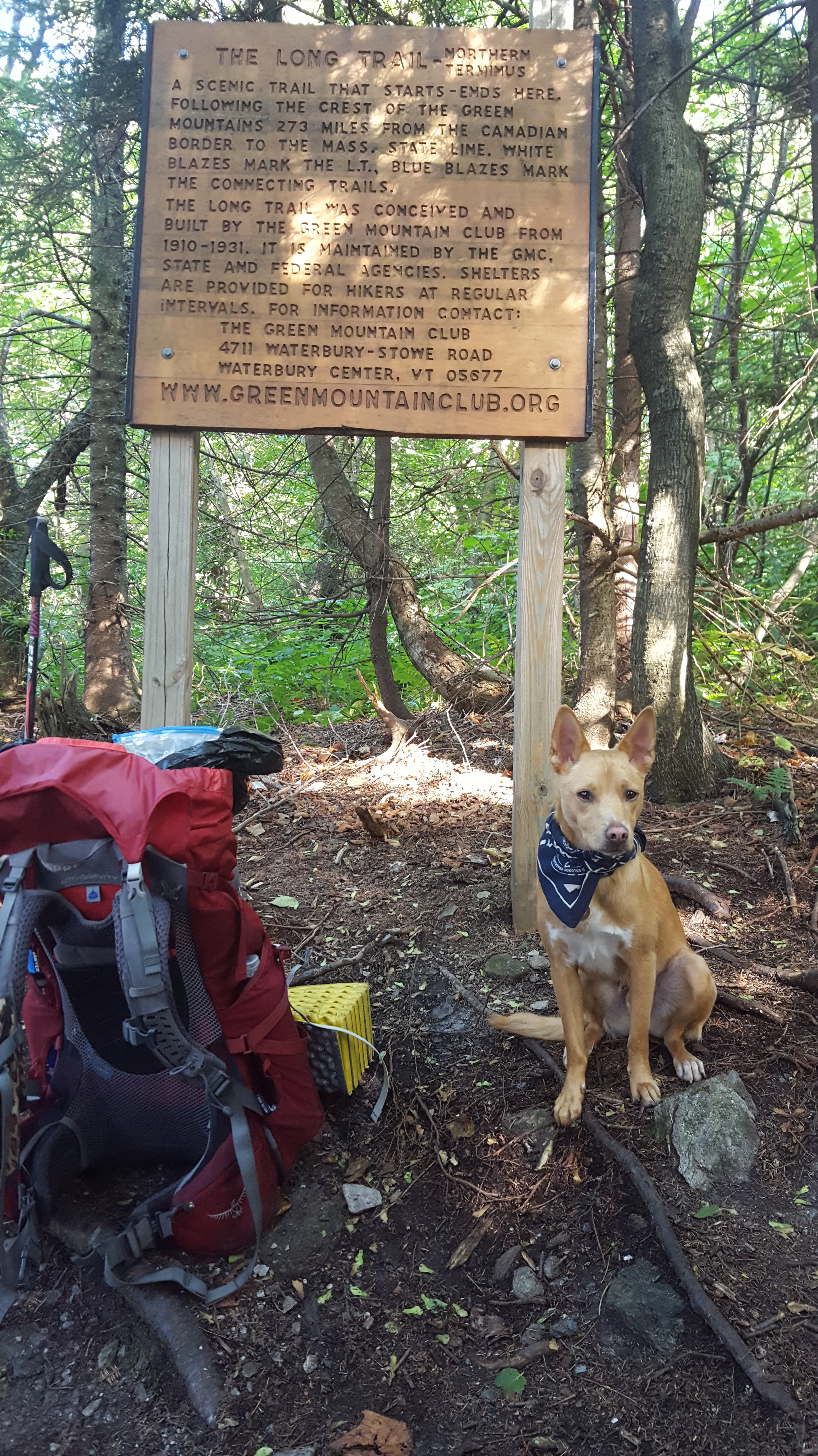 Final photo of Benny the hiking dog on the Vermont Long Trail at the border of Canada in Northern Vermont.